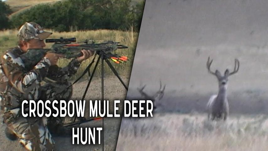 Crossbow Hunt for Giant Mule Deer in Wyoming | Throwback