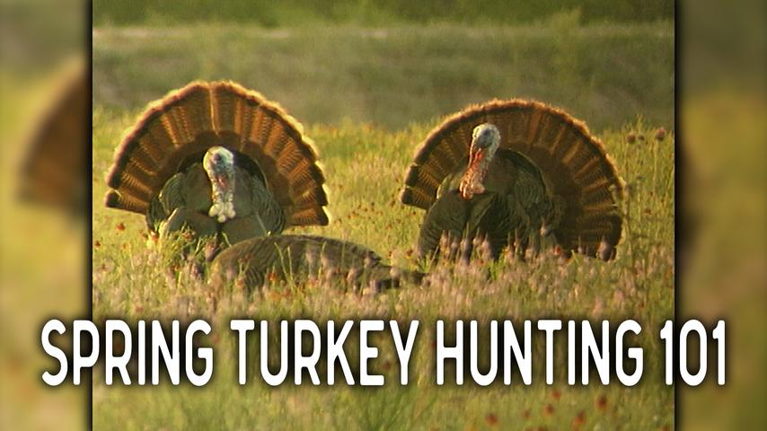 Spring Turkey Hunting 101 with Knight & Hale Game Calls