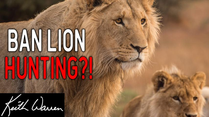 Should Lion Hunting be Banned?? - Live Q&A Recap  #1