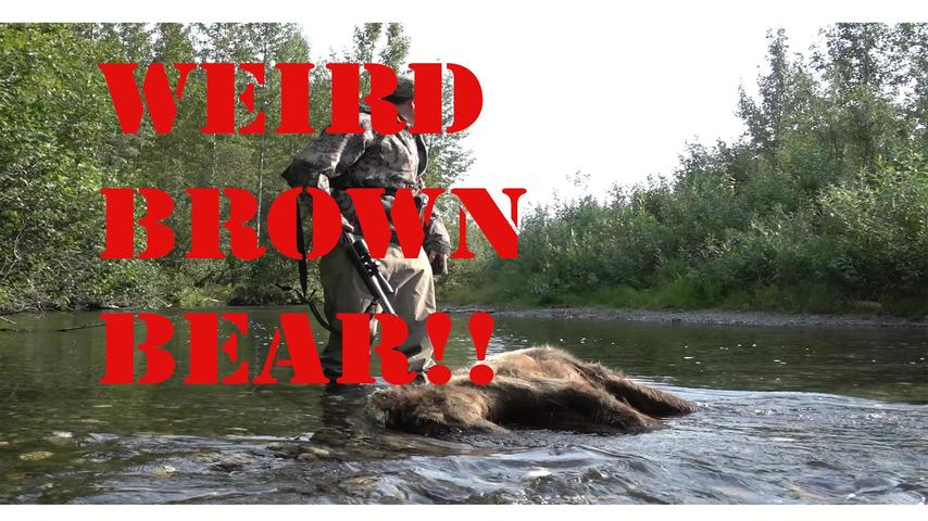 Dead Brown Bear Found in River While Fishing and Hunting