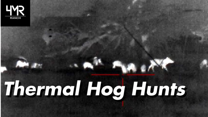 Thermal Hog Hunting
