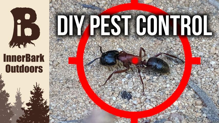 How To Get Rid of ANTS Like a Pro | DIY Pest Control